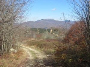 View of Whitetop Mountain and Mt Rogers from Rogers Ridge
